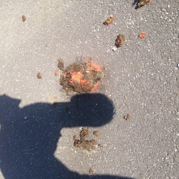 I love the humor of the race director who marked the trail with orange paint, including some horse droppings along the way
